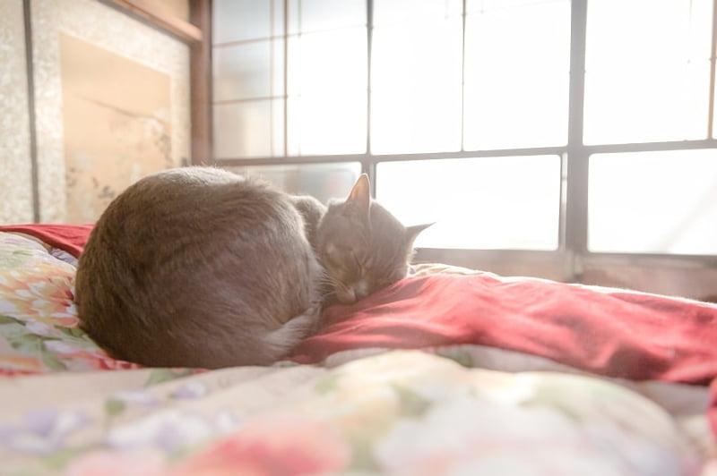 布団の上で眠る猫