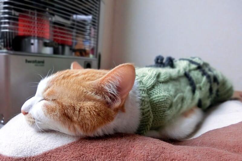 ストーブの前で眠るネコ
