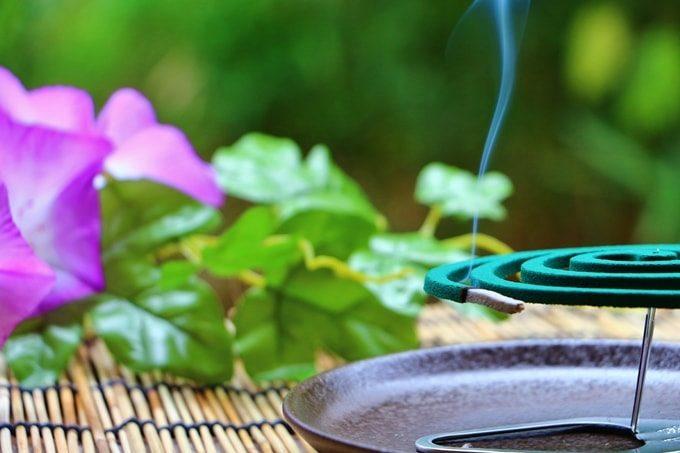 アサガオと蚊取り線香