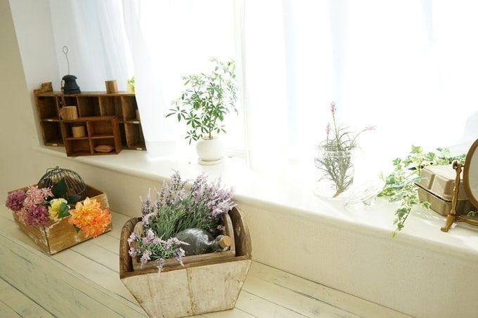 窓際に置いてある植物
